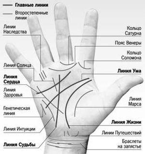 Линии рук